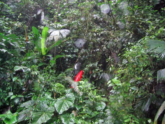 kayakers repelling in the Costa Rican jungle