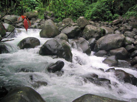 River Bed Characteristic Patria